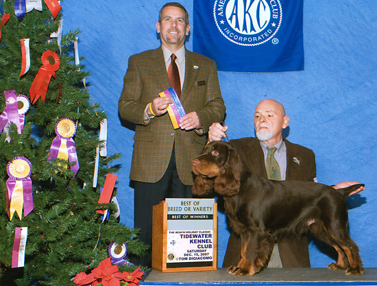 Earl Best of Breed Field Spaniel