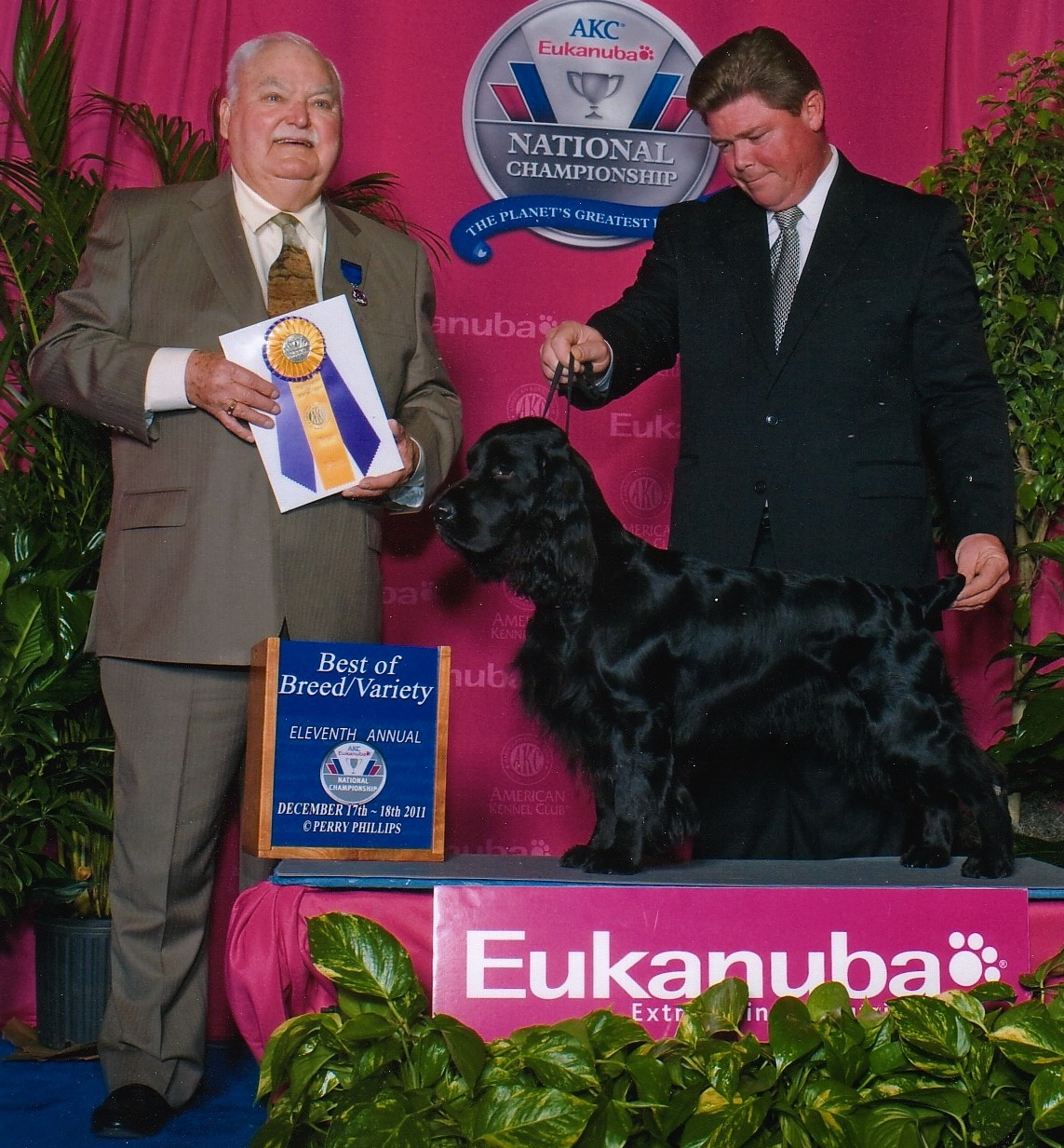 Oliver Field Spaniel Best of Breed