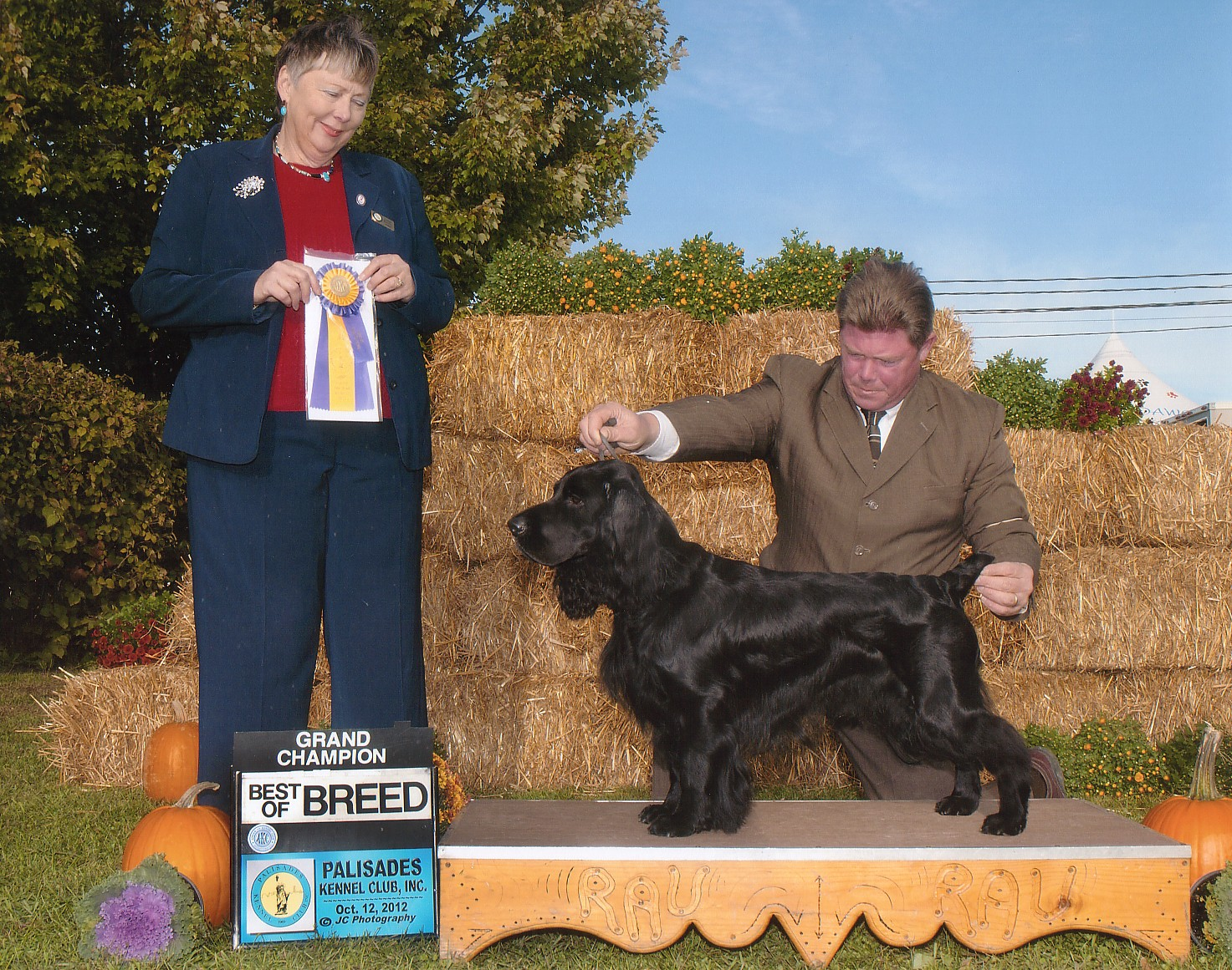 Oliver Field Spaniel Best of Breed and Grand Champion